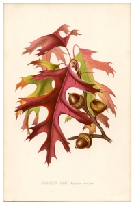 Vintage-Fall-Oak-Leaves-Images-GraphicsFairy-sm